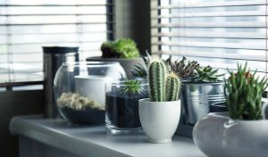 Various plants on a table by the window.