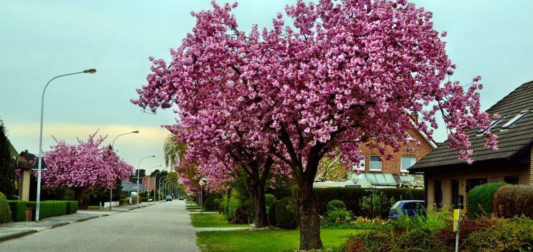 Charming neighborhoods of New Rochelle